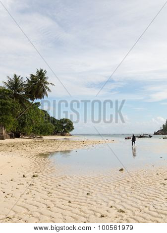 Low Tide On The Island Of Mahe
