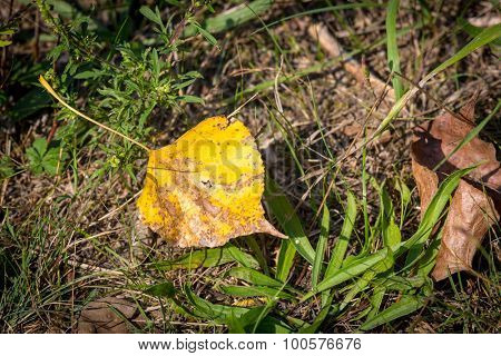 Abstract yellow autumn leaf on green grass