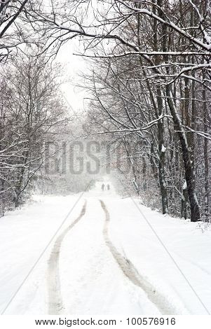 snowfall on the country road