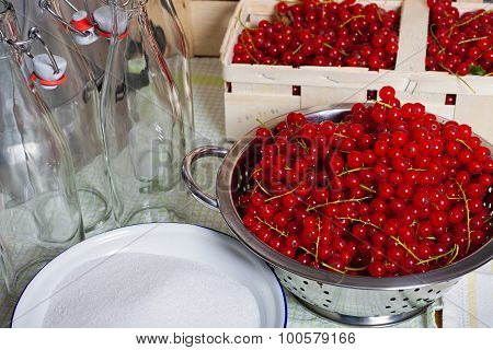 Red Ripe Currants In Colander