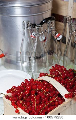 Ripe Red Currants For Syrup