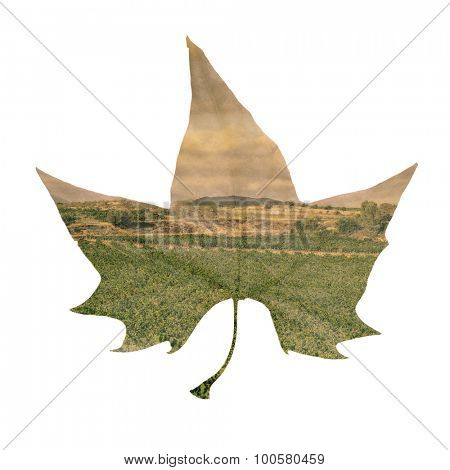 double exposure of a platanus leaf and a natural landscape, against a white background