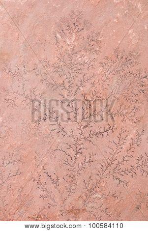 Dendrite On Sandstone