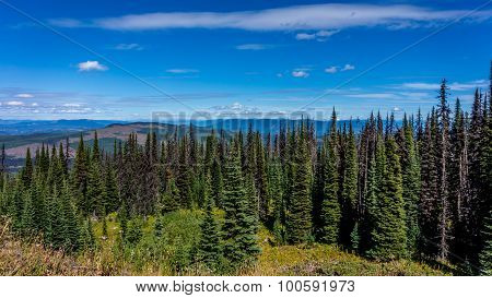 Hiking through alpine meadows and coniferous trees