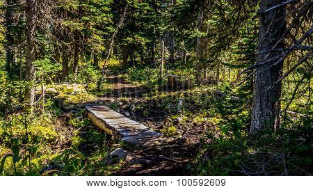 Wooden Bridge on a Hiking Trail