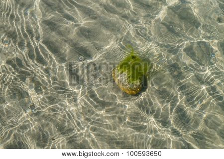 Stone With Alga At The Sandy Bottom Of Sea, View Through Transparent Water