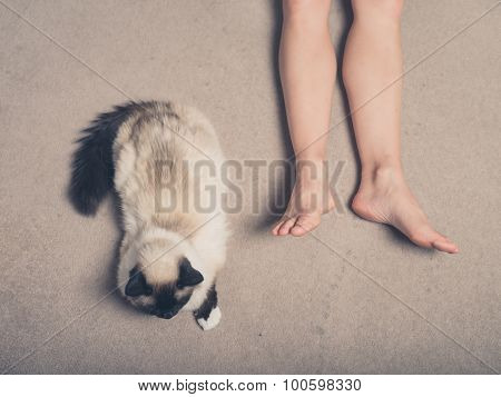 Cat And Feet Of Young Woman On Carpet