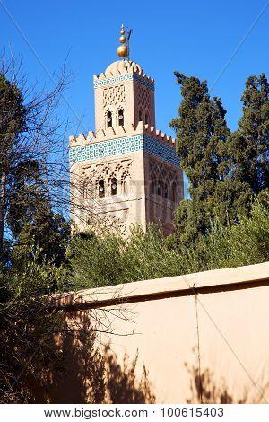 Muslim The History  Symbol  In Morocco  Tree