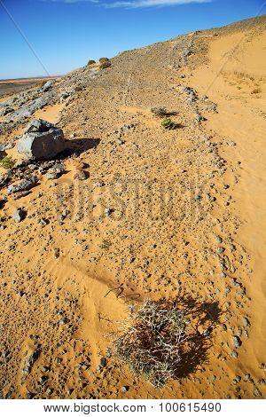Old Fossil In  The Desert Of Bush  Sky