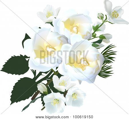 illustration with jasmine and rose flowers isolated on white background