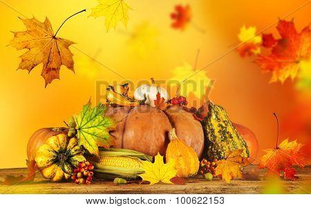 Autumn background with pumpkins, close up.