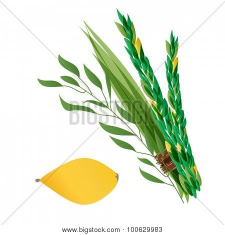 Vetor illustration of four species - palm, willow, myrtle , lemon - symbols of Jewish holiday Sukkot. Holiday of Sukkot  illustration.