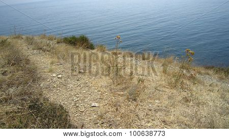 Withered Grass And Sea