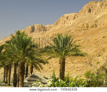Judean Mountains In Israel