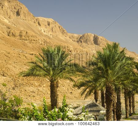 Israel Mountains And Palm Trees