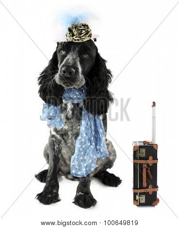 Funny dog tourist with suitcase and hat, isolated on white