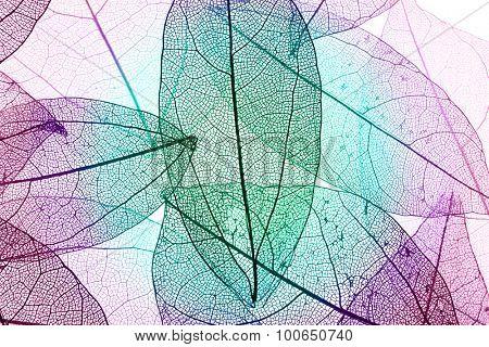 Multicolor decorative skeleton leaves