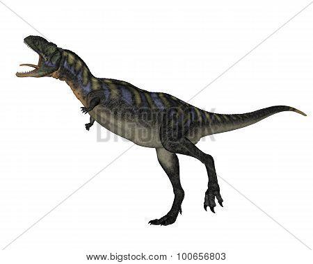 Aucasaurus dinosaur walking roaring - 3D render
