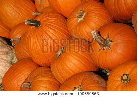 Halloween Pumkin Patch