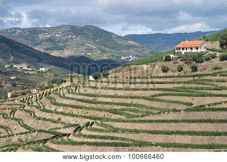 Vineyard in the Douro Valley