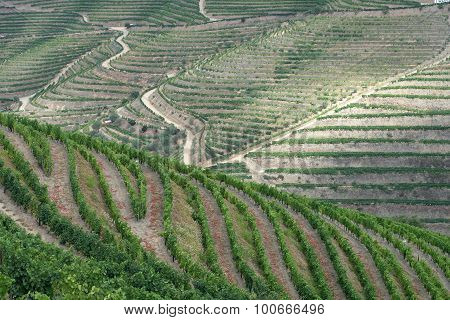 Terraced grapevines fill the hills of the Douro Valley