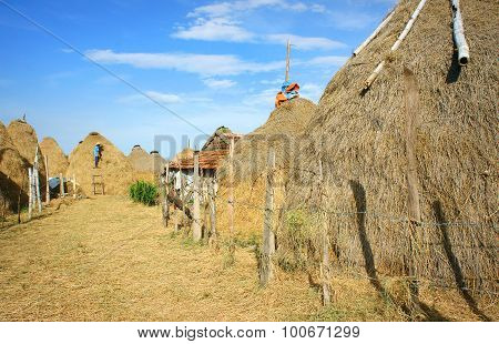 Vietnamese Village, Stack Of Straw, Cowshed, Vietnam