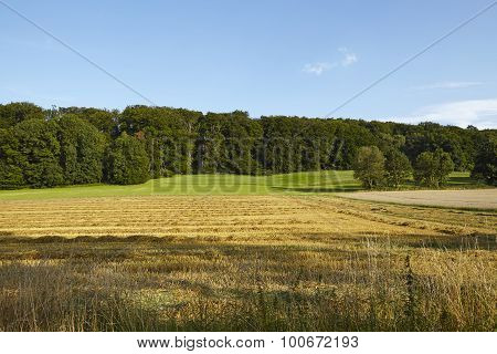 Landscape With Fields And Border Of A Wood
