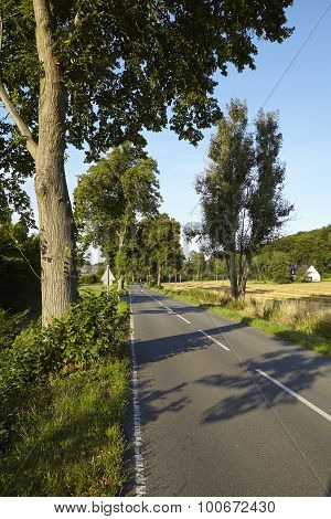 Road With Trees And Blue Sky In The Ruhr Area