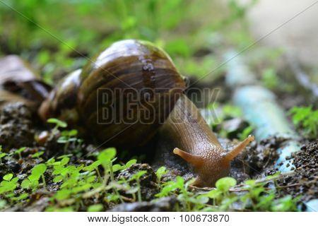 snail walks on wooden plates