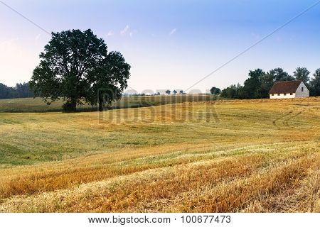landscape with oaks3