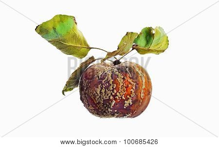 Rotten Apple With Leaves