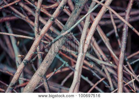Twig Pile