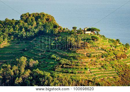Cinque Terre (liguria, Italy), Green Terraces