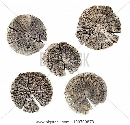 Set tree trunk cross-section isolated