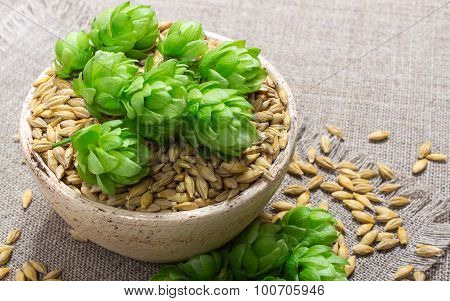Fresh Hops And Barley Grain - Closeup