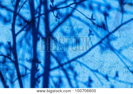 Blurred Background Of A Wall With Tree Shadow On It