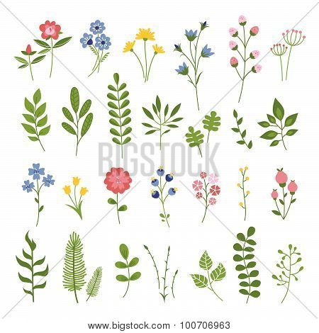Floral Hand Drawn Vector Set. Flowers and Leaves Collection