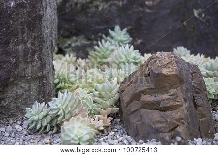 Rock Garden With Sedum