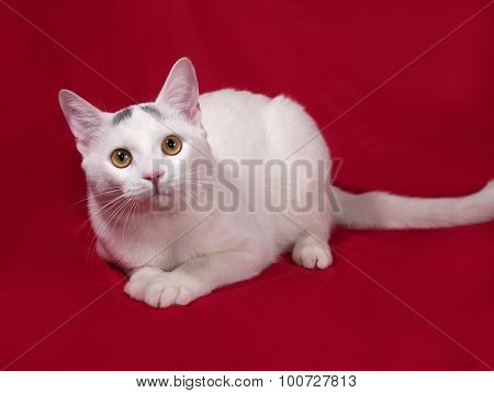 White Cat With Gray Spots Lies On Red