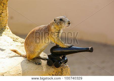 Prairie dog manning cannon