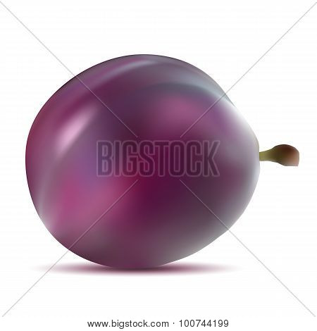 Realistic Vector Plums.