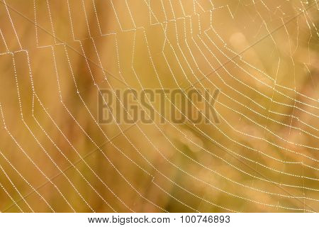 Cobweb Dew Drops Background