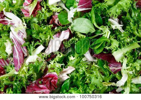 Mixed Salad Leaves  Frisee, Radicchio And Lamb's Lettuce. Background, Texture