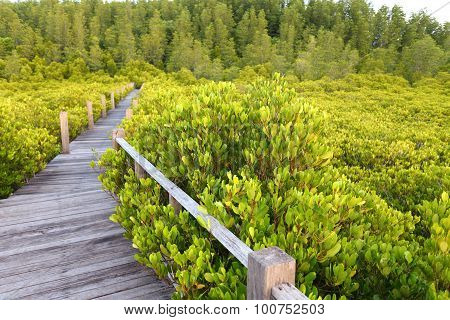 Walkway made from wood and mangrove field