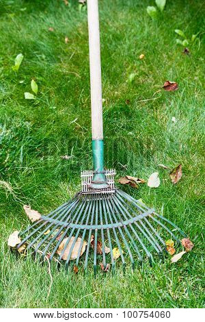 Cleaning Of Leaf Litter From Lawn By Rake
