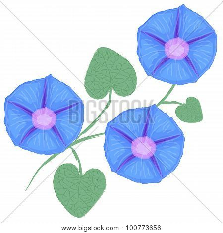 Branch of flower Ipomoea, morning glory. Vector illustration