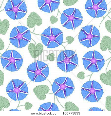 Seamless with flower Ipomoea, morning glory. Vector illustration without transparency