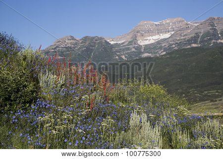 Wildflowers In A Beautiful Rocky Mountain Scene Of Mount Timpanogos
