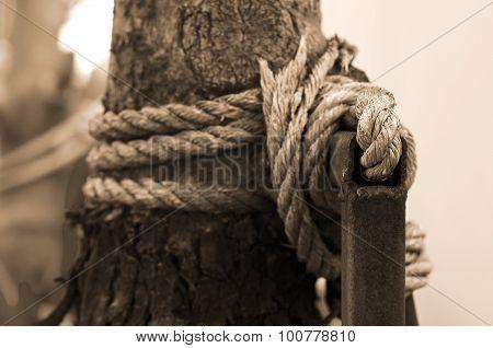 Manila rope around the tree