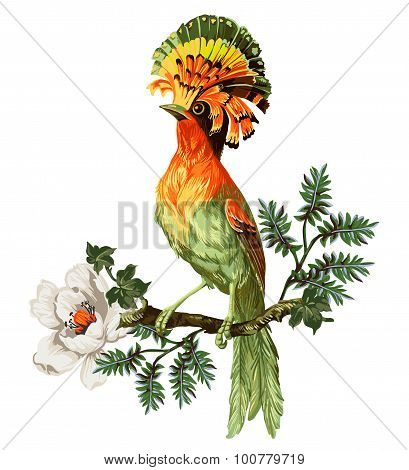 Bird of Paradise and exotic flowers